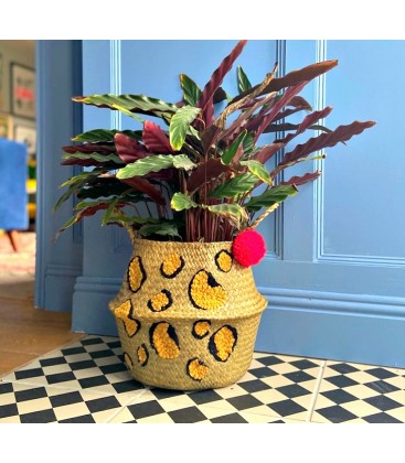 Leopard Print with red pom pom basket